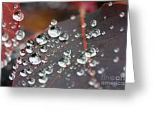 Water Drops On Cotinus Greeting Card