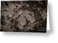 Water Drops On Fallen Leaves Greeting Card