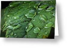Water Drops On Leaf 1 Greeting Card
