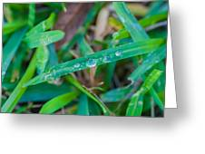Water Drops On The  Grass 0003 Greeting Card