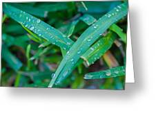 Water Drops On The  Grass 0004 Greeting Card