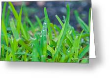 Water Drops On The  Grass 0007 Greeting Card