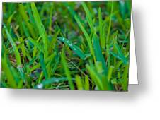 Water Drops On The  Grass 0010 Greeting Card