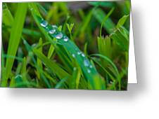 Water Drops On The  Grass 0014 Greeting Card