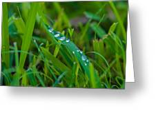 Water Drops On The  Grass 0015 Greeting Card