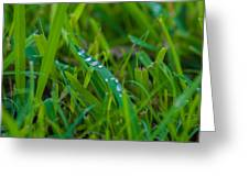 Water Drops On The  Grass 0016 Greeting Card