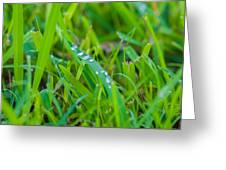 Water Drops On The  Grass 0017 Greeting Card