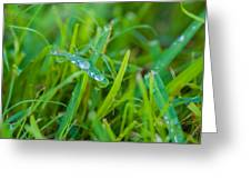 Water Drops On The  Grass 0018 Greeting Card