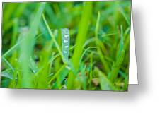 Water Drops On The  Grass 0020 Greeting Card