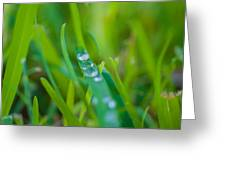 Water Drops On The  Grass 0021 Greeting Card