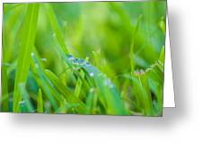 Water Drops On The  Grass 0025 Greeting Card