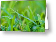 Water Drops On The  Grass 0029 Greeting Card