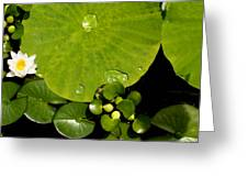 Water Drops Bristol Rhode Island Greeting Card