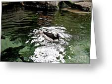 Water Duck Greeting Card