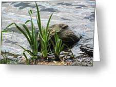 Water Fern Greeting Card