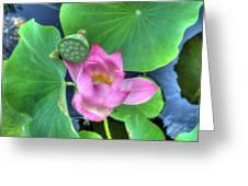 Water Flower Greeting Card