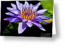 Water Flower Greeting Card by Nick Zelinsky