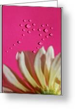 Water Flowers Greeting Card by Kip Krause