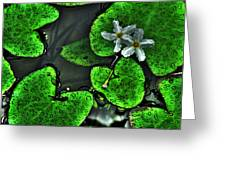 Water Flowers Greeting Card
