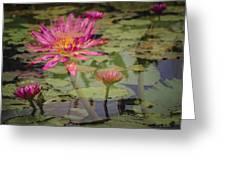 Water Garden Dream Greeting Card