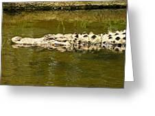 Water Gator Greeting Card