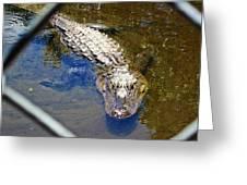 Water Hole Gator Greeting Card