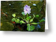 Water Hyacinth Float Greeting Card