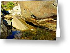 Water In Oasis On Borrego Palm Canyon Trail In Anza-borrego Desert Sp Campground-ca  Greeting Card