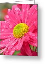 Water Kissed Pink Chrysanthemum 2 Greeting Card