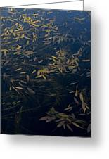 Water Leaves Greeting Card