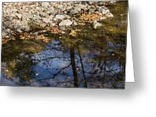 Water Leaves Stones And Branches Greeting Card