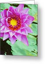 Water Lilies 003 Greeting Card