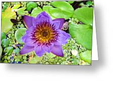 Water Lilies 12 Greeting Card