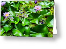 Water Lilies 31 Greeting Card