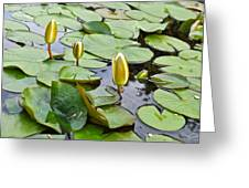 Water Lilies Aligned Greeting Card