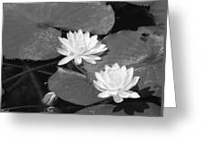 Water Lilies And Bud Greeting Card