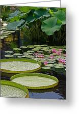 Water Lilies And Platters And Lotus Leaves Greeting Card