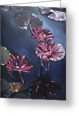 Water Lilies At Sunset Greeting Card