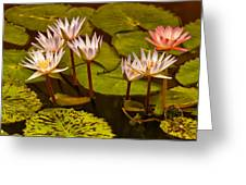 Water Lilies Img_6388 Greeting Card