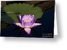 Water Lilies Monet Greeting Card