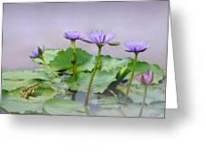 Water Lilies Of Vietnam Greeting Card