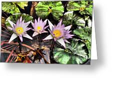 Water Lilies Water Drop And Reflection In Water Greeting Card