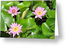 Water Lilies 3 Greeting Card