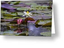 Water Lillies9 Greeting Card