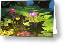 Water Lilly Garden Greeting Card