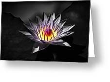 Water Lilly In Hdr Greeting Card