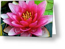 Water Lilly Greeting Card by Frozen in Time Fine Art Photography