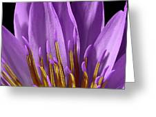 Water Lily-0005 Greeting Card