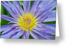 Water Lily 16 Greeting Card
