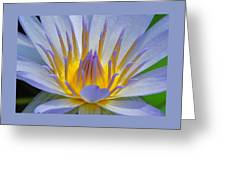 Water Lily 18 Greeting Card
